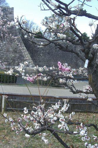 sakiwake02.jpg